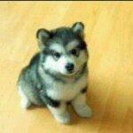 wolffy5