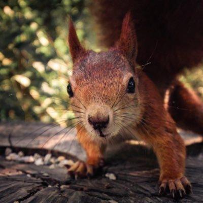 Inquisitive_Squirrel82